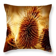 Coneflower Deadhead Throw Pillow