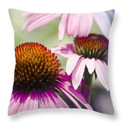 Coneflower Jewel Tones - Echinacea Throw Pillow