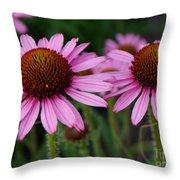 Coneflowers - Echinacea Purpurea Throw Pillow