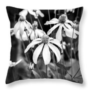 Coneflowers Echinacea Yellow Bw Throw Pillow by Rich Franco