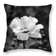 Confederate Rose Bw Throw Pillow