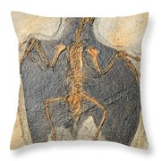 Confuciusornis Fossil Throw Pillow