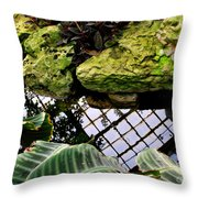 Conservatory Reflections Throw Pillow