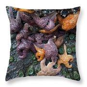 Starfish Constellation Throw Pillow
