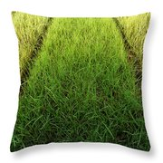 Container Art Throw Pillow
