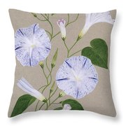 Convolvulus Cneorum Throw Pillow by Frances Buckland