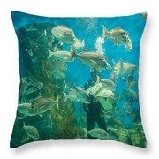 Cool Aquarium Throw Pillow by Ray Warren
