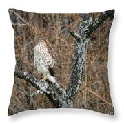 Coopers Hawk 0741 Throw Pillow