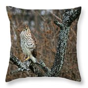 Coopers Hawk 0745 Throw Pillow