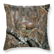 Coopers Hawk 0750 Throw Pillow