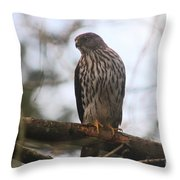 Cooper's  Hawk Dines Here Throw Pillow