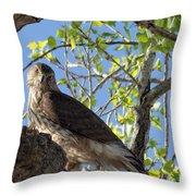 Cooper's Hawk In A Cottonwood Throw Pillow