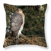 Coopers Hawk In Predator Mode Throw Pillow