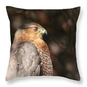 Coopers Hawk In Profile Throw Pillow