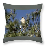 Coopers Hawk In Tree Throw Pillow