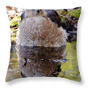 Coopers Hawk Pictures 112 Throw Pillow