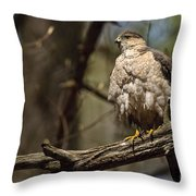 Coopers Hawk Pictures 124 Throw Pillow