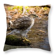 Coopers Hawk Pictures 61 Throw Pillow