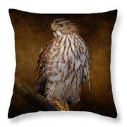 Coopers Hawk Portrait 1 Throw Pillow