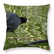 Coot Calling Throw Pillow