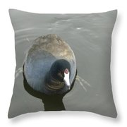 Coot Portrait Throw Pillow
