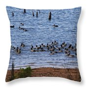 Coots On The Water Throw Pillow