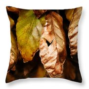 Copper Beech Leaves Throw Pillow