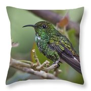 Copper-headed Emerald Beauty Throw Pillow
