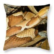 Copperhead Snake Throw Pillow