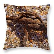 Coral Beach Treasure  Throw Pillow