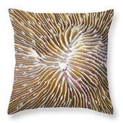 Coral Closeup Throw Pillow