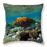 Coral Cruiser Throw Pillow