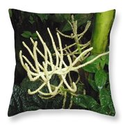 White Palm Flower In Costa Rica Throw Pillow