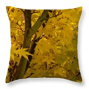 Coral Maple Fall Color Throw Pillow