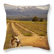 Corgi And Mt Shasta Throw Pillow