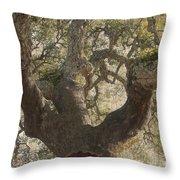 Cork Oak Tree Throw Pillow