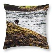 Cormorant - Montague Island - Australia Throw Pillow