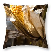 Corn In Husk Throw Pillow