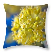 Cornelian Cherry. Cornus Mas. European Cornel Throw Pillow