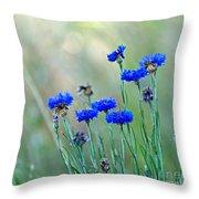 Cornflowers Throw Pillow