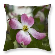 Cornus Florida - Pink Dogwood Blossoms Throw Pillow