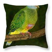 Coronated Fruit Dove Throw Pillow