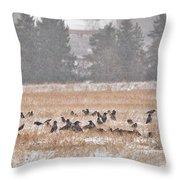Corvus Field Throw Pillow