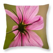 Cosmos In Pink Throw Pillow