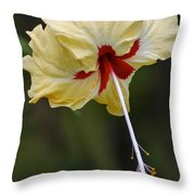 Costa Rica Hibiscus Throw Pillow