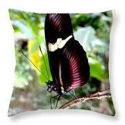 Costa Rican False Postman Butterfly Throw Pillow