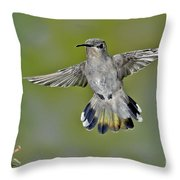 Costas Hummingbird Throw Pillow