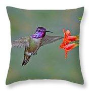 Costas Hummingbird At Flower Throw Pillow
