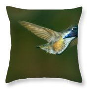 Costa's Hummingbird Feeding Throw Pillow
