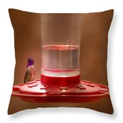 Costa's Hummingbird Keeping Guard Throw Pillow